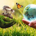 Pilze an die Macht - ein Artikel über die Pilze in der KRONEN ZEITUNG